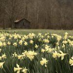 Converge's Spring Playlist